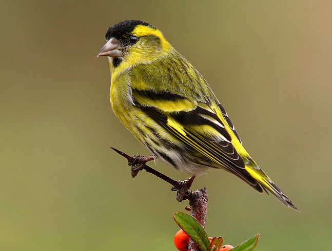 http://www.aviariolhman.com/images/lugano_02.jpg